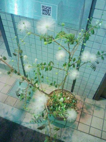 この植物何?