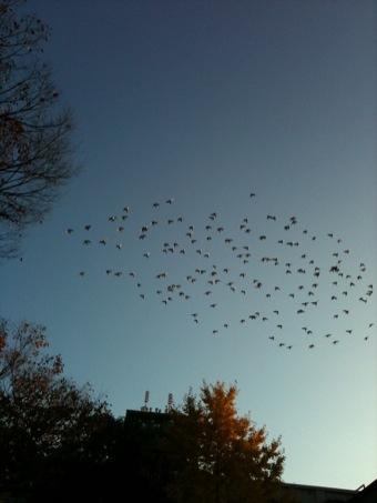 秋晴れと、鳥